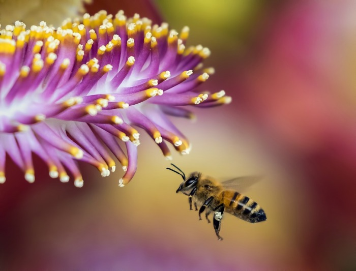 bee-and-flower
