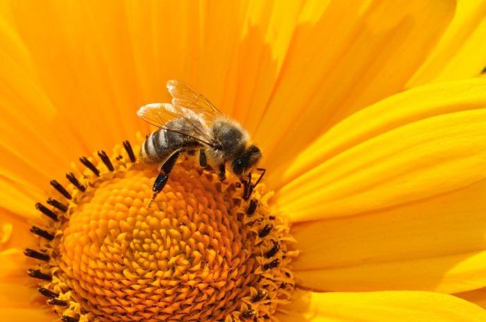 orange-flower-and-bee