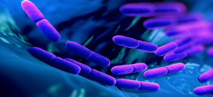 lactobacillius