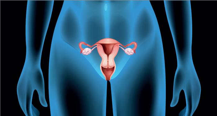 vaginal microbiome.png