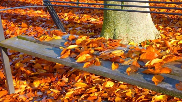 autumn-1leaves