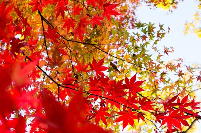 autumn-1leaves3