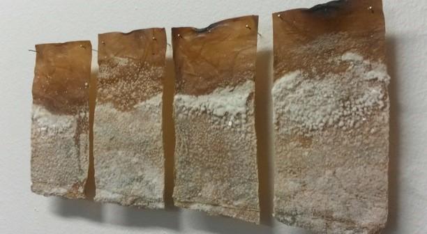 kombucha crystals