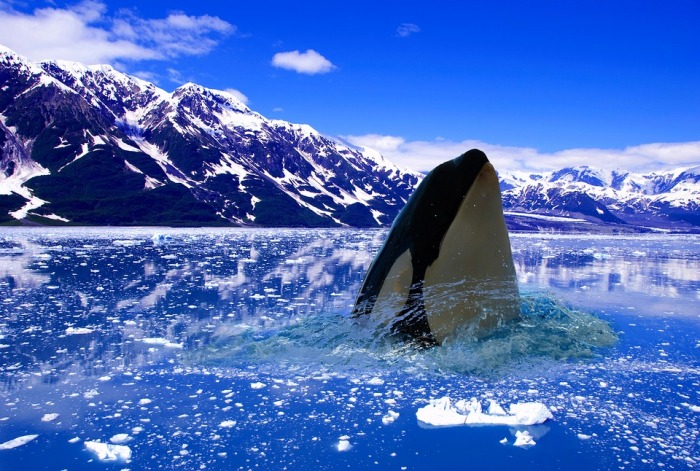whale ice