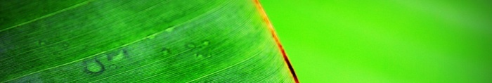 banana-leaf-banner